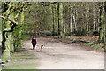 TQ2897 : Walking the Dog, Trent Park, London N14 by Christine Matthews