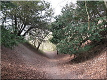 TQ1148 : Gully on North Downs Way by don cload