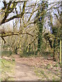 TM3958 : Footpath to Snape Common by Geographer