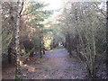 NZ0576 : Footpath through Birneys Plantation by Les Hull
