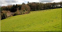 J2458 : Field, Hillsborough by Albert Bridge