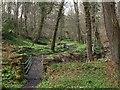 NZ1666 : Footbridge and path, Walbottle Dene by Andrew Curtis
