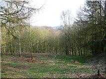 SE1839 : Glade in Dawson Wood. Idle by Humphrey Bolton