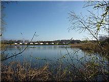 NT6578 : Coastal East Lothian : Sunday Morning at Seafield Pond, Belhaven by Richard West