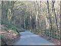 SO5203 : Road drops through the woods to Cleddon by Sarah Charlesworth