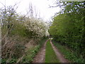 TM3860 : Footpath & entrance to Manor Farm by Adrian Cable