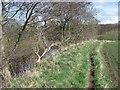 NT8642 : Riverside path by Richard Webb