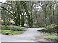 SX2268 : Path to Golitha Falls by Sarah Charlesworth