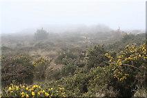 SW6433 : Heathland on Polcrebo Downs by Rod Allday