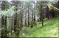 NN4526 : Forest in Glen Dochart by Alan Reid
