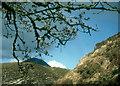 NR4672 : Leaf burst and Beinn a' Chaolais by Alan Reid