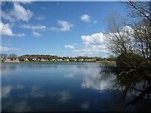 NT6578 : East Lothian Landscape : Seafield Pond, Belhaven by Richard West