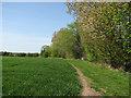 TL5358 : Path to Newmarket Road near Hawk Mill Farm by John Sutton