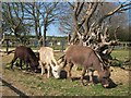 TQ5214 : Donkey's at Blackberry Farm by Oast House Archive