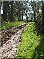 ST0600 : Green Lane near Higher Tale by Derek Harper