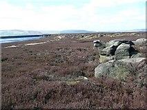 SD9521 : Sheep turned to stone, Stony Edge, Langfield by Humphrey Bolton