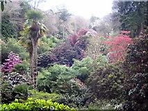 SW7627 : Trebah Gardens by Rod Allday