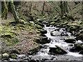SX1290 : Steep Stream near Lesnewth by Tony Atkin