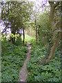 TM3366 : Footpath to Bruisyard Wood by Geographer