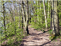 SJ8092 : Wooded Path, Sale Water Park by David Dixon