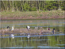 SJ7993 : Broad Dole Ees Nature Reserve by David Dixon