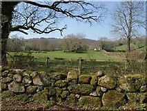 SX7070 : Fields near Lower Hannaford by Derek Harper