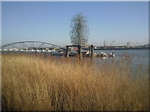 TQ3979 : Reed bed on the Greenwich Peninsula by Marathon