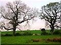 SJ4764 : Hedgerow near Cotton Abbotts by Anthony Parkes