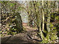 SK2563 : Woodland path near Lees Cross quarries by Andrew Hill