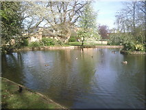 TQ2274 : Pond in the grounds of Roehampton University by Marathon