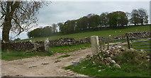 SK2158 : Longedge Plantation by Andrew Hill