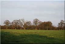 TQ2394 : Open countryside in the Dollis Brook Valley by N Chadwick