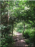 TQ3765 : Footpath in the wood east of Bracken Avenue, CR0 by Mike Quinn