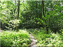 TQ3765 : Footpath in the wood east of Jasmin Gardens, CR0 by Mike Quinn