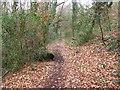 ST1384 : Public footpath beside Nant y Brynau by John Light