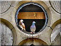 SD7111 : Pigeons at Astley Bridge Cemetery Chapel by David Dixon
