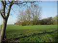 TL3574 : Barnfield Farm by Marathon