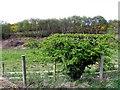C0434 : Ballymore Townland by Kenneth  Allen