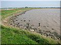 TG5008 : The north-eastern edge of Breydon Water by Evelyn Simak