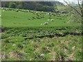 SO0191 : Grazing land beside the Afon Cerist by John M