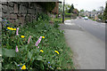 SK2472 : Bistort and dandelions beside the A623 by David Lally