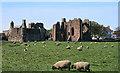 NU1241 : Lindisfarne Priory by Peter McDermott
