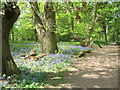 SP2873 : Bluebells, Crackley Wood by E Gammie