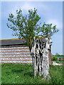 SU0725 : Dead and alive, Faulston Farm by Maigheach-gheal