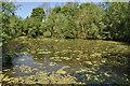 TL8928 : Pond near Chappel by Ashley Dace