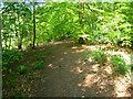 SU8286 : Path in Pullingshill Woods by Given Up