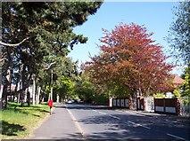SD2806 : Kirklake Road Formby by Raymond Knapman