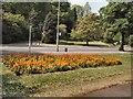 TQ3006 : Flowerbed - Preston Park by Paul Gillett