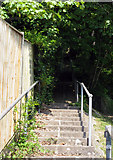 TQ3355 : Caterham:   very long flight of steps by Dr Neil Clifton