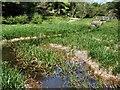 TQ3330 : Wetland Conservation area - Wakehurst Place by Paul Gillett
